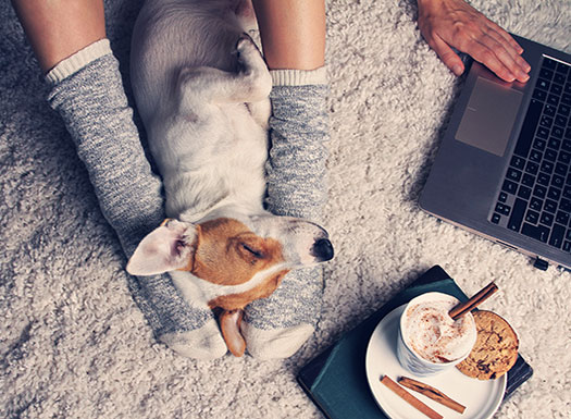 Dog on floor between legs sleeping with laptop and coffee